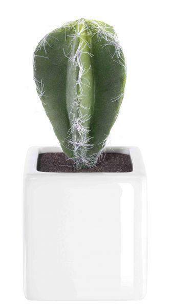 Kaktus V
