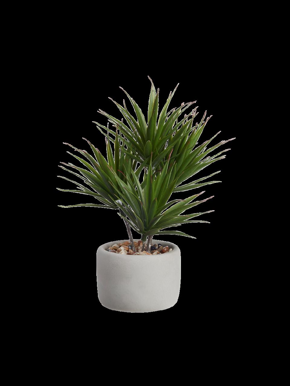 Bonsai Palme