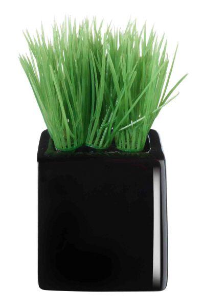 Mini-Gras