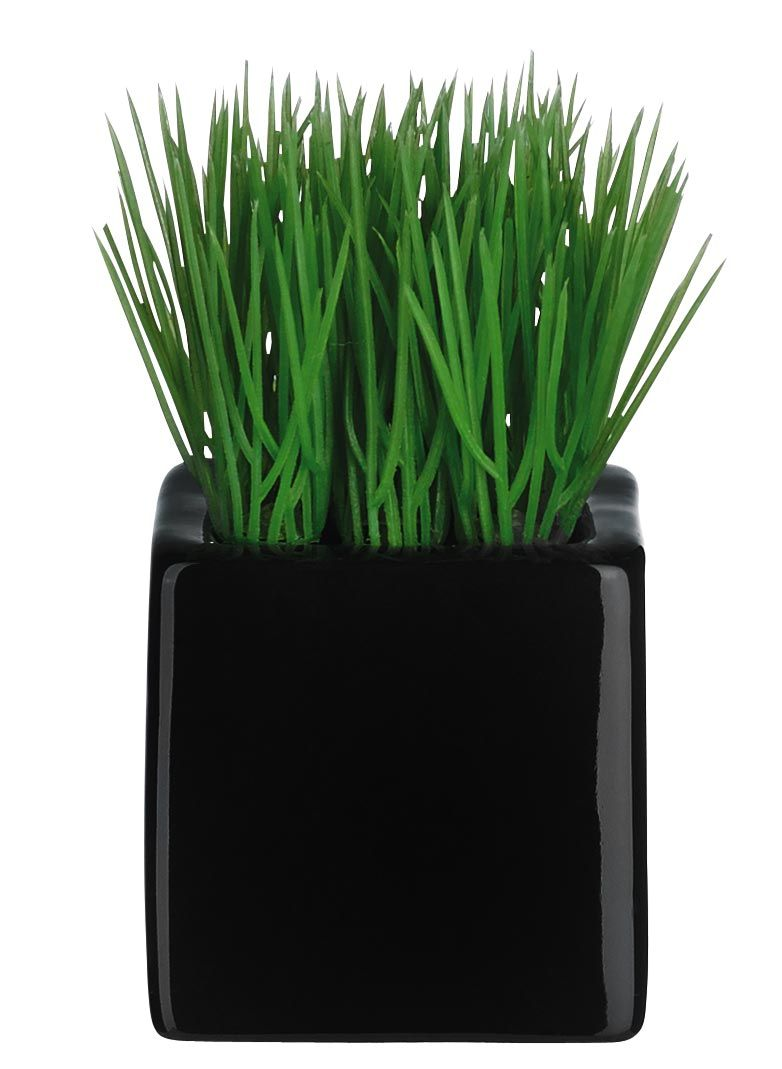 Mini Gras