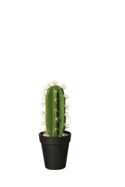 Kaktus Wolfsmilch