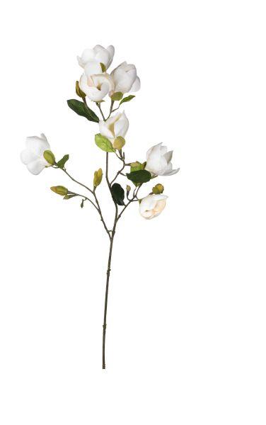 Magnolienzweig, weiß