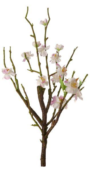 Kirschblütenstrauch , weiss