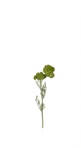 Schafgarbe, grün
