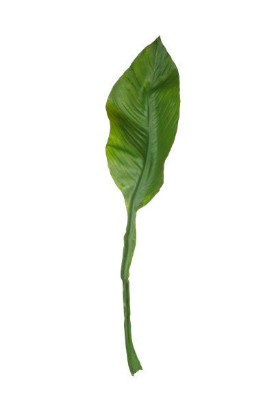 Amazonaslilienblatt