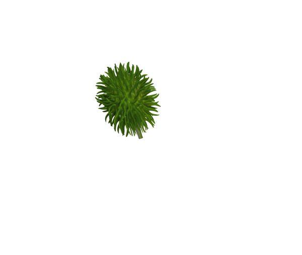 Stachelgurke, grün